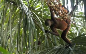 spider palms1