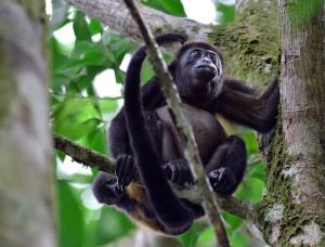 juliegillett-monkeybaby